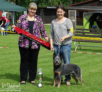 Rassebester Australian Cattle Dog in Lauf an der Pegnitz 2014